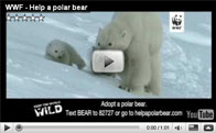 Still from Polar Bear Adoption Video