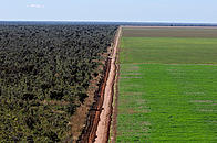 Aerial view of an unpaved road dividing a soy (Glycine max) monoculture from the native Cerrado