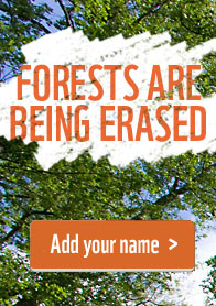 Sign the Forest Campaign petition