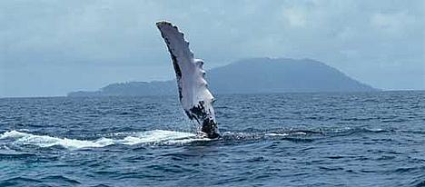 Whale fluke  Jurgen Freund / naturapl.com