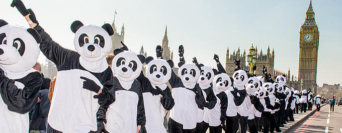 60 people in panda costumes